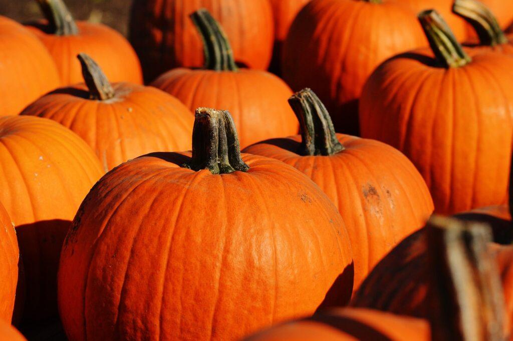 pumpkin-970236_1280
